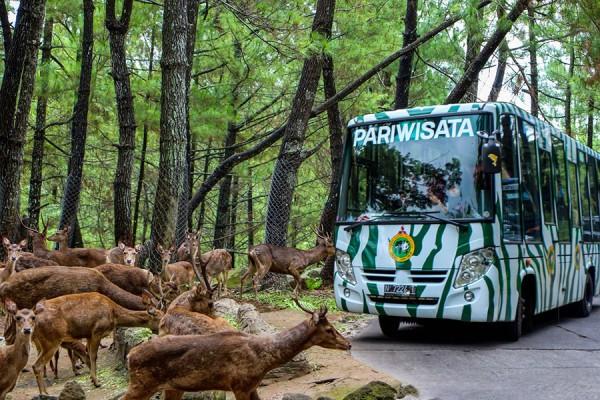 Mengelilingi Taman Safari Prigen Pasurauan Jawa Timur