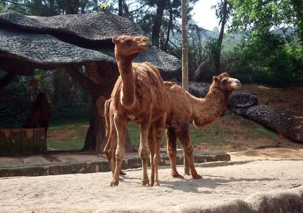 Taman Safari Bogor, Keindahan dan Pesona Wisata Edukasi di Jawa Barat