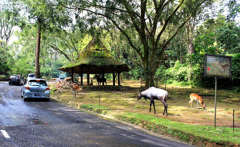 Taman Safari Bogor Jawa Barat